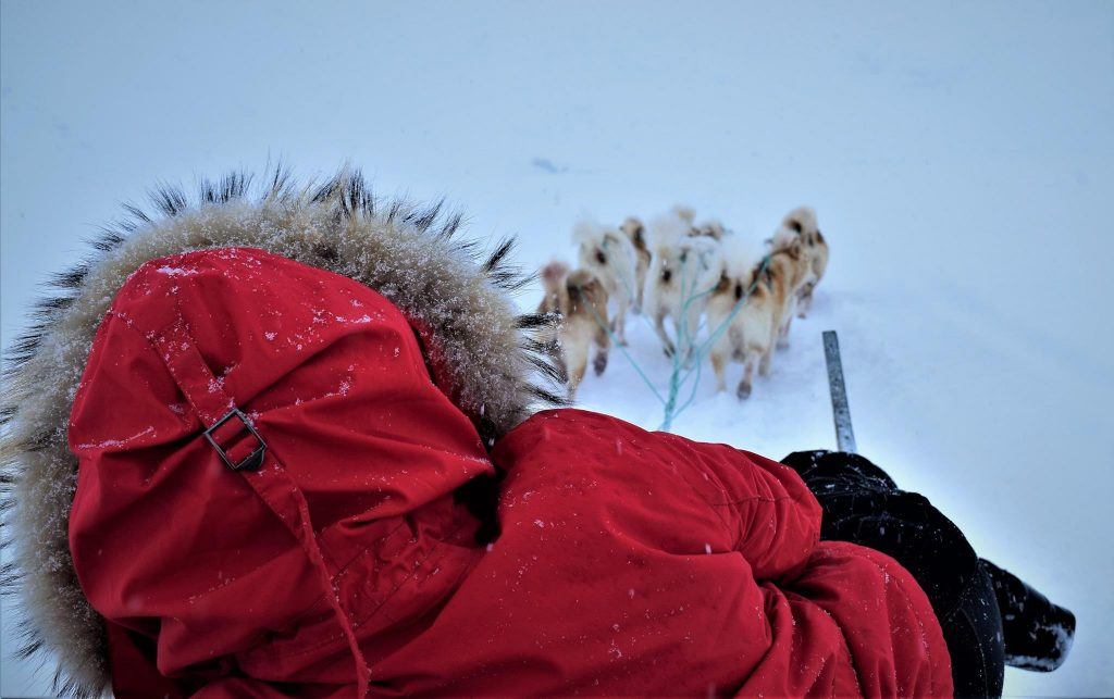 Girl in red jacket, dog sledding near Tasiilaq