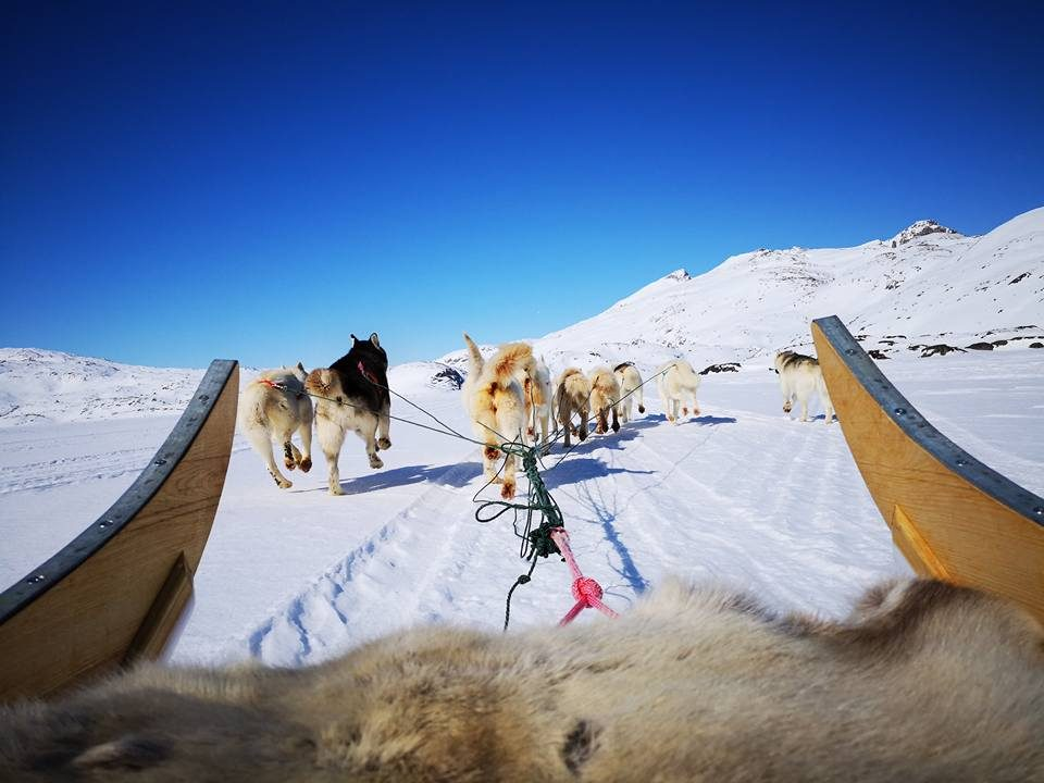 View to the dogs from a dog sled